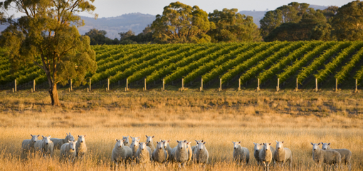 There are several wineries in the Euroa region.