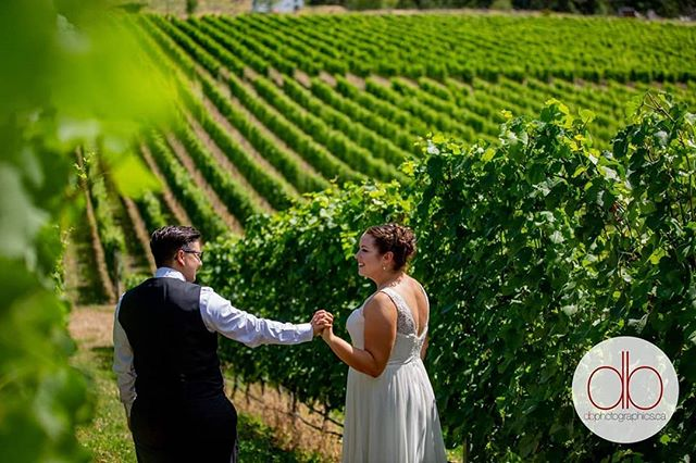 When in Naramata, take wedding photos in the vineyards. That's how the saying goes right? Congratulations Dawn and Stefanie! #naramata #weddings #thebrides