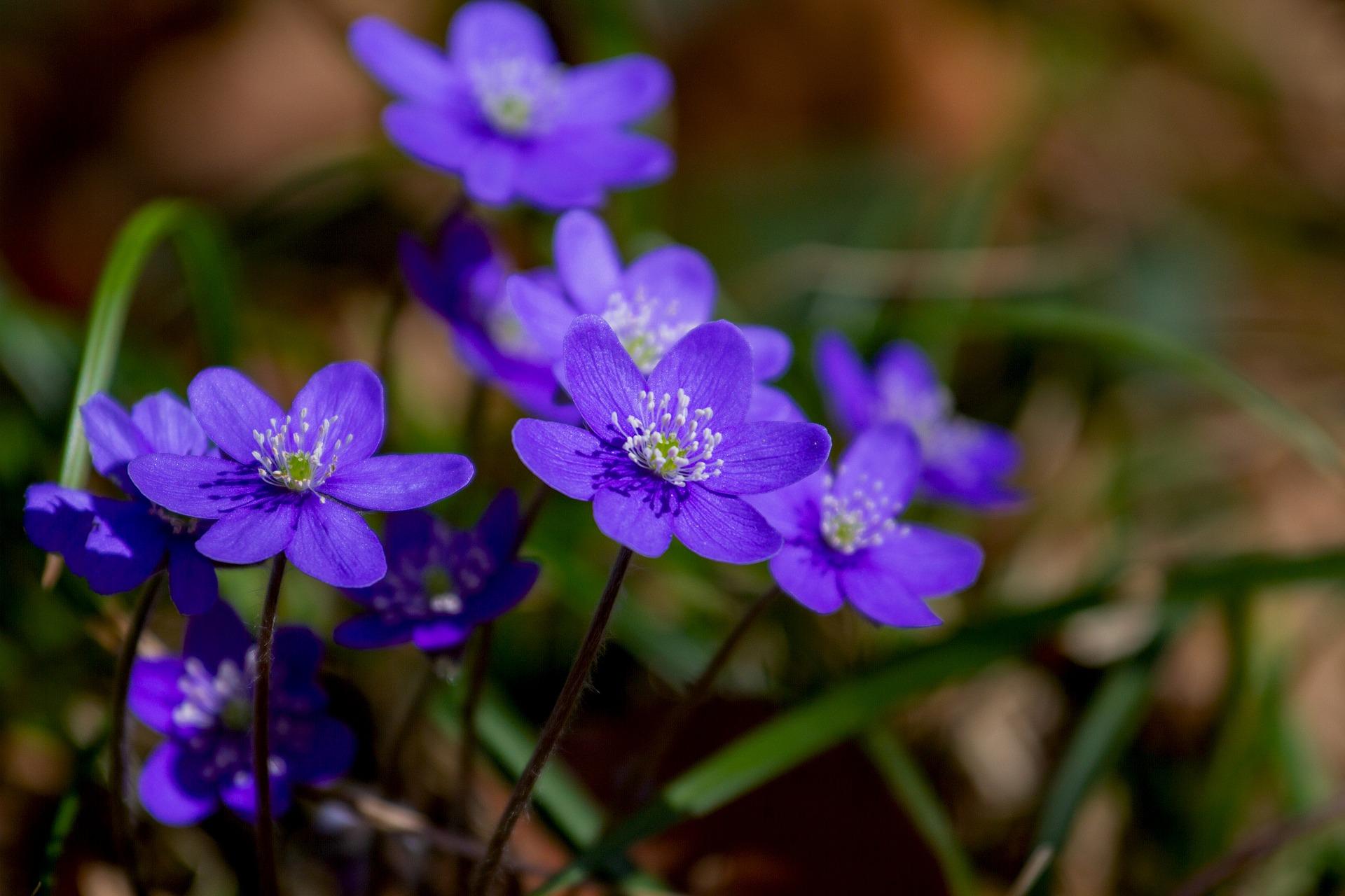flower-3329845_1920.jpg