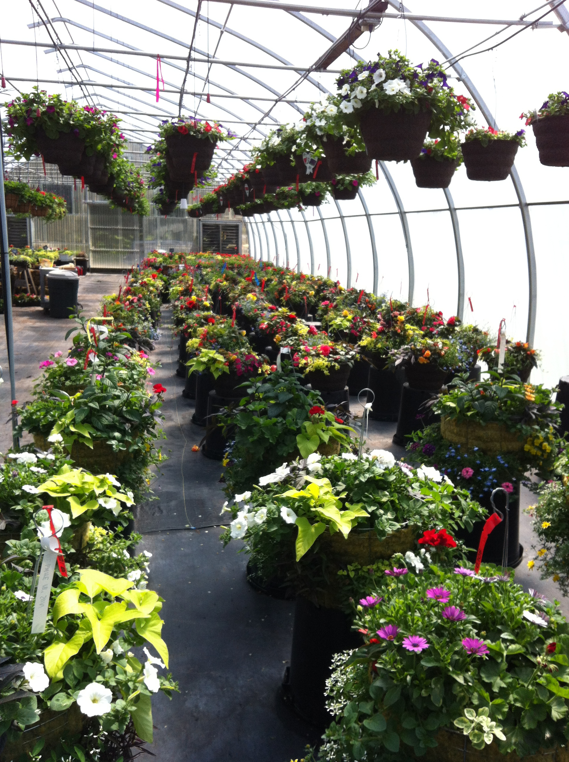 Flower Farm_Greenhouse5.jpg