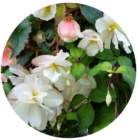 Flower Circle 1.png