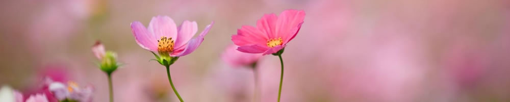 flowerstemp.jpg