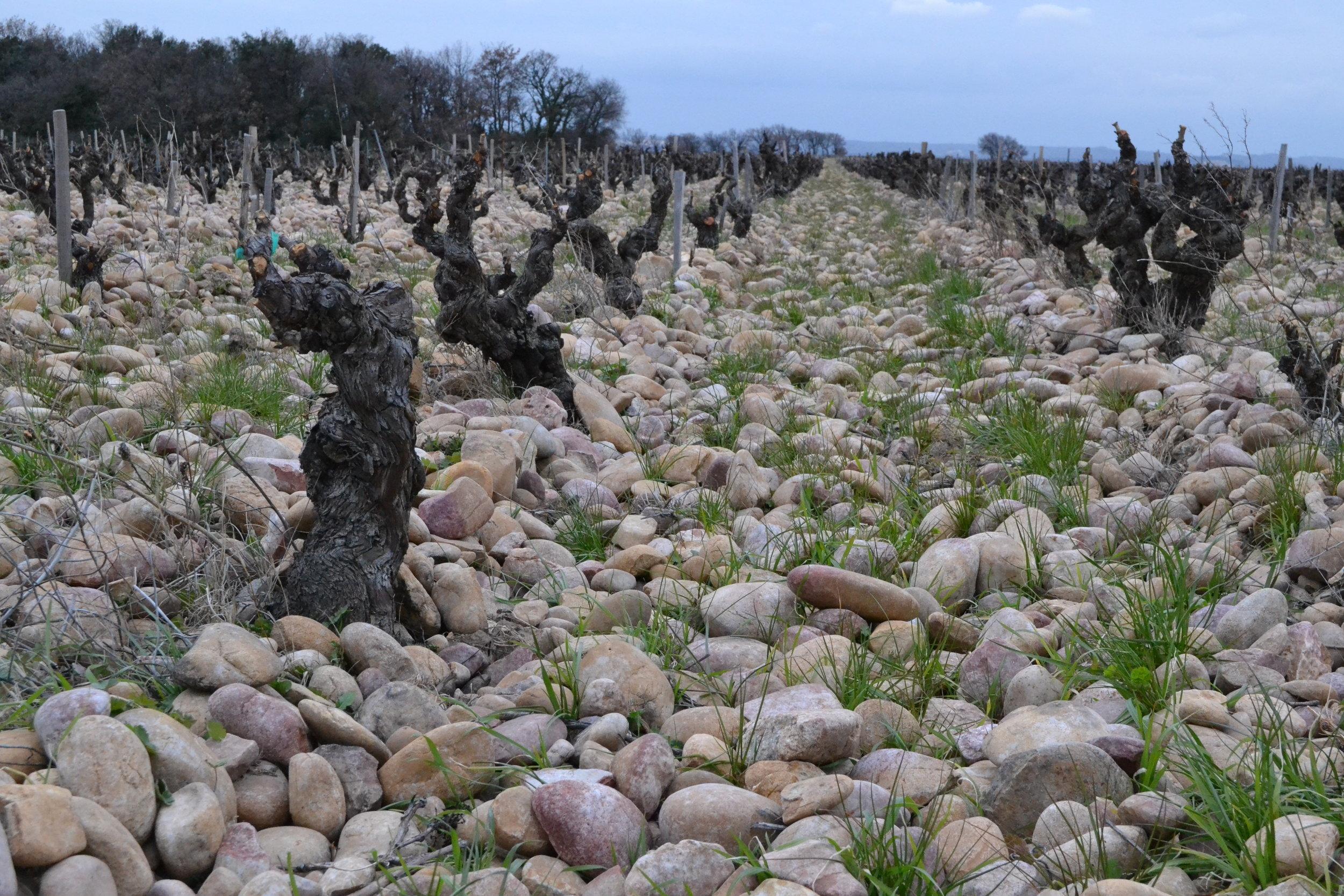 Châteauneuf-du-Pape: Gallette stones
