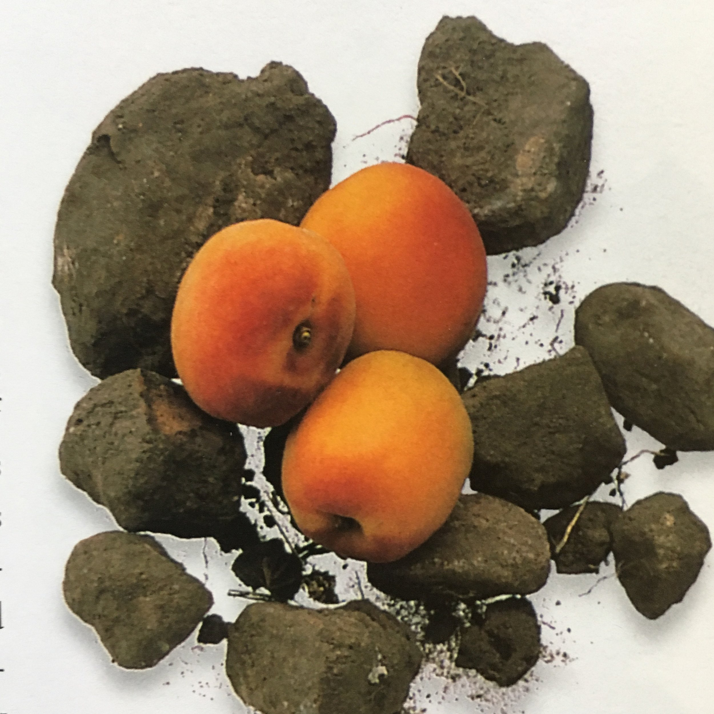 Sandstone and Apricots
