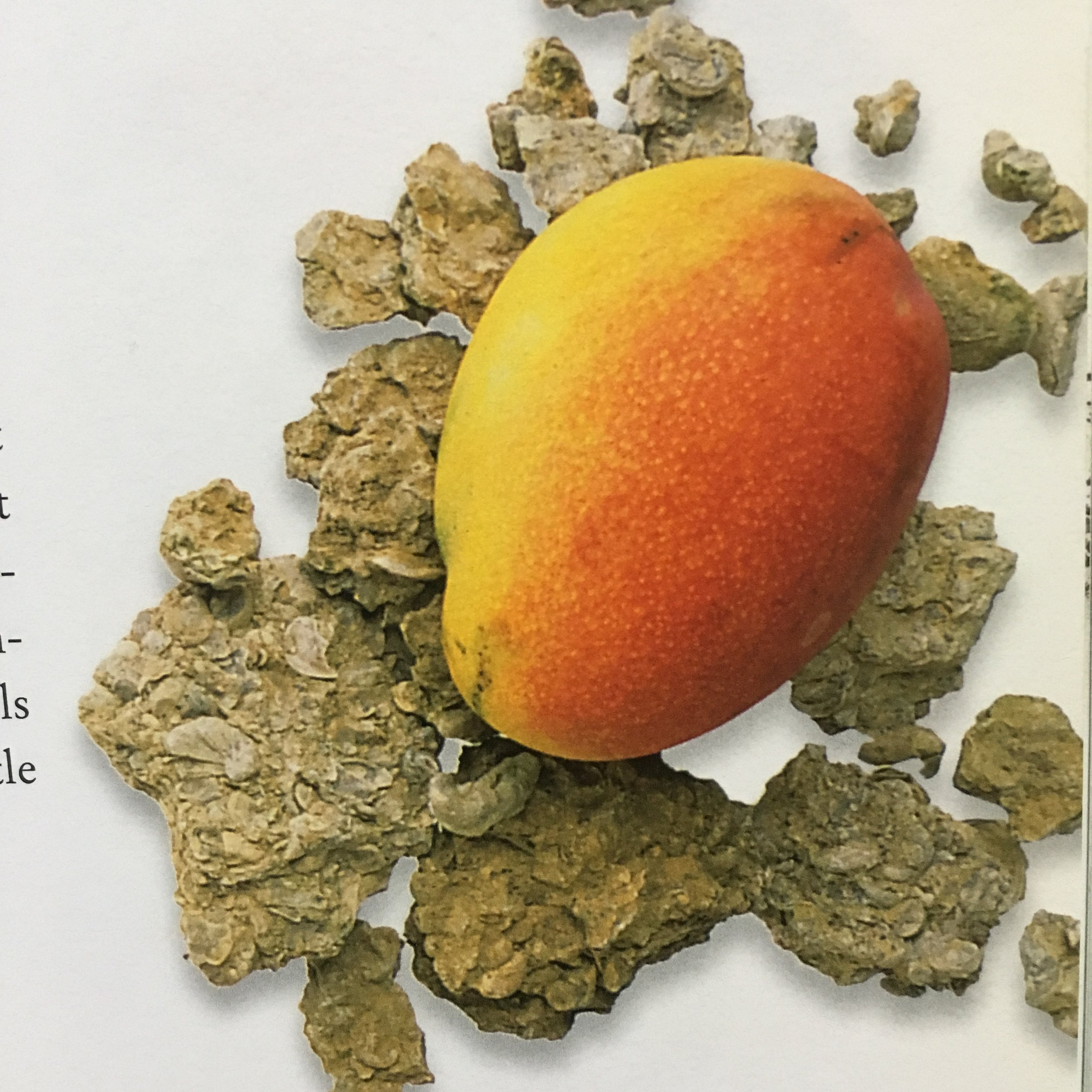 Shell limestone and Mango