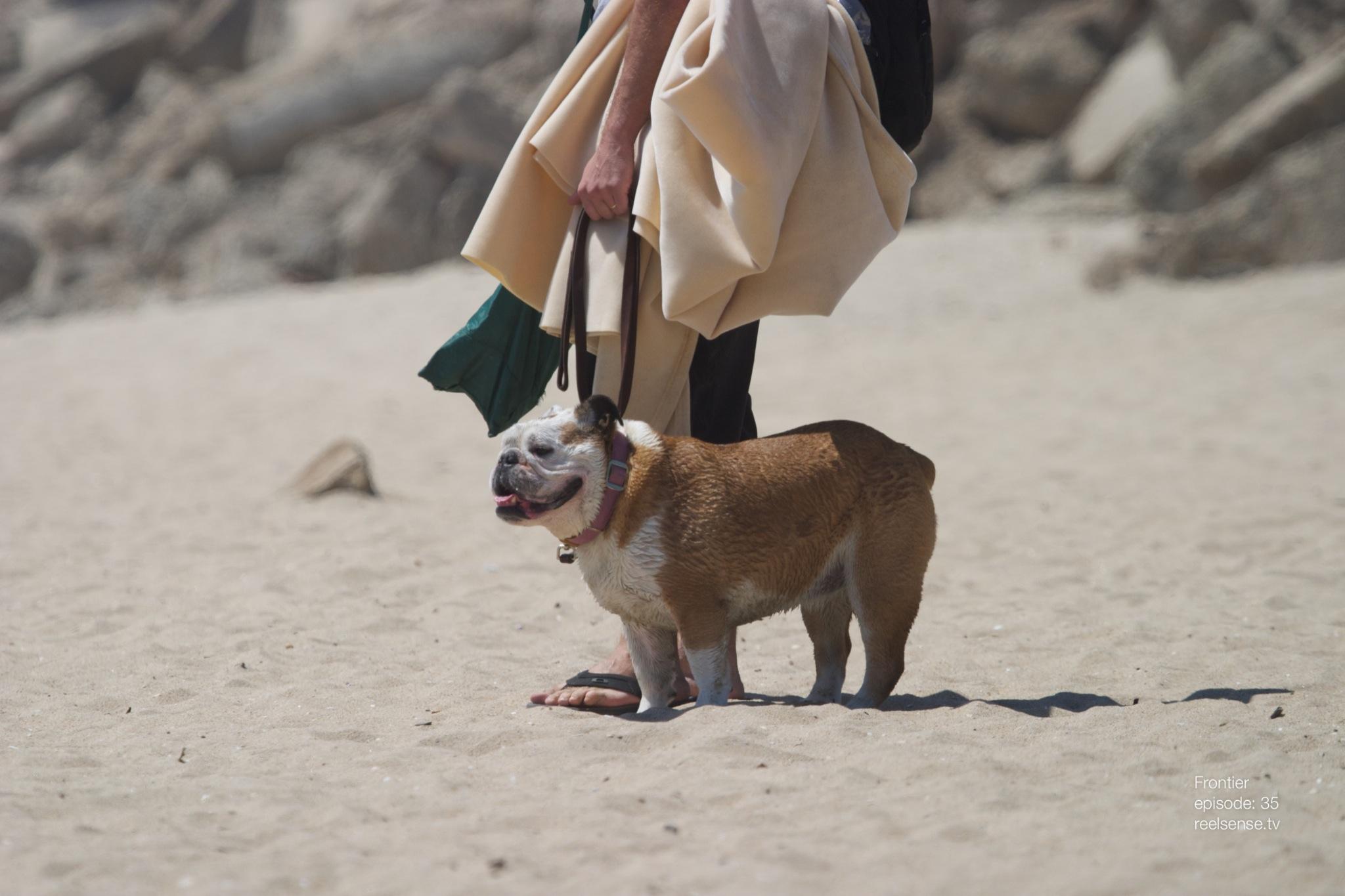 Huntington Dog Beach - A Pug on Corgi Day 2013