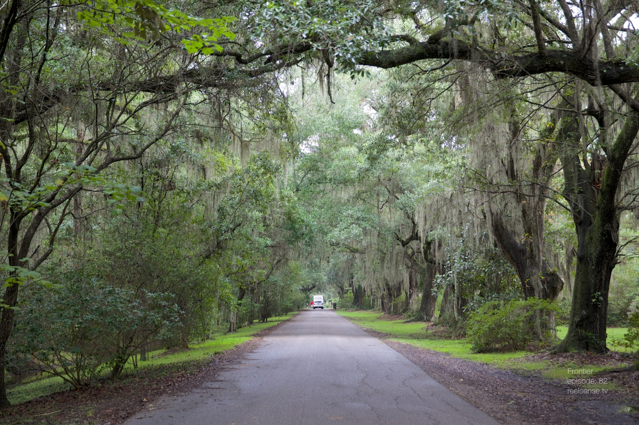 Old trees and Spanish moss