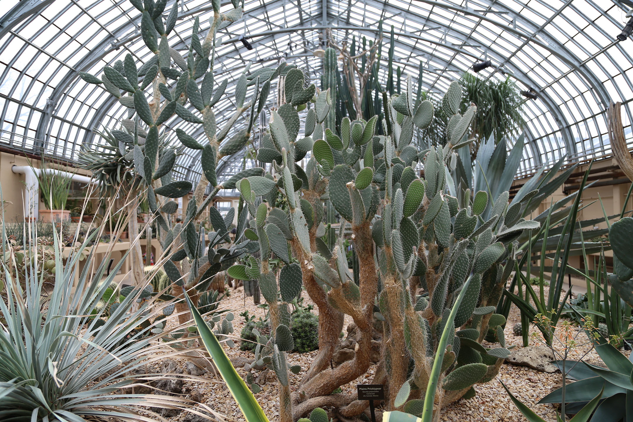 The cacti families look spectacular under the glass ceiling!