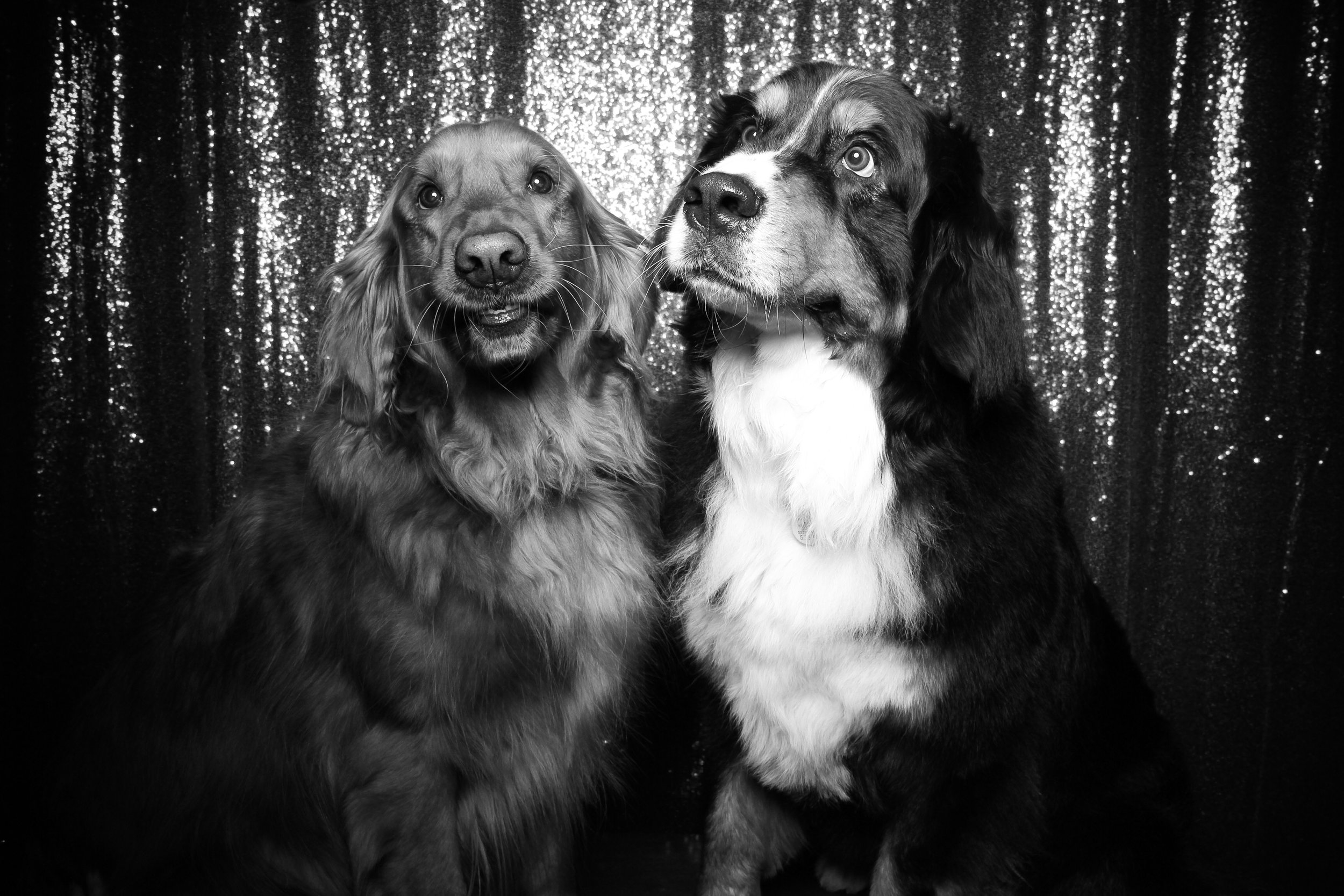 Chicago_Vintage_Photobooth_Valentines_Day_Dog_25.jpg