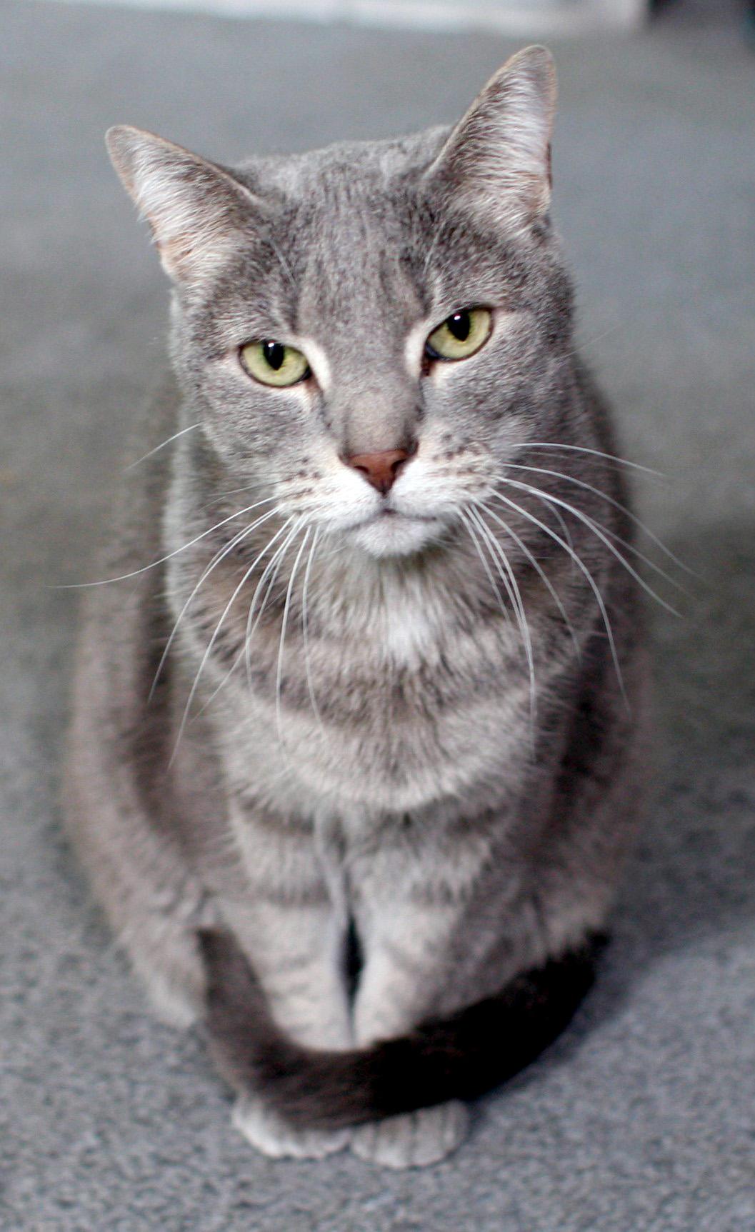 Cat: Eddie