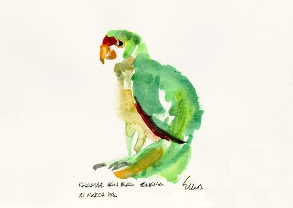 panama parrot_032196.JPG