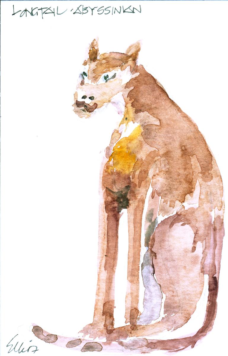 Abyssinian Cat, Malibu Julietta