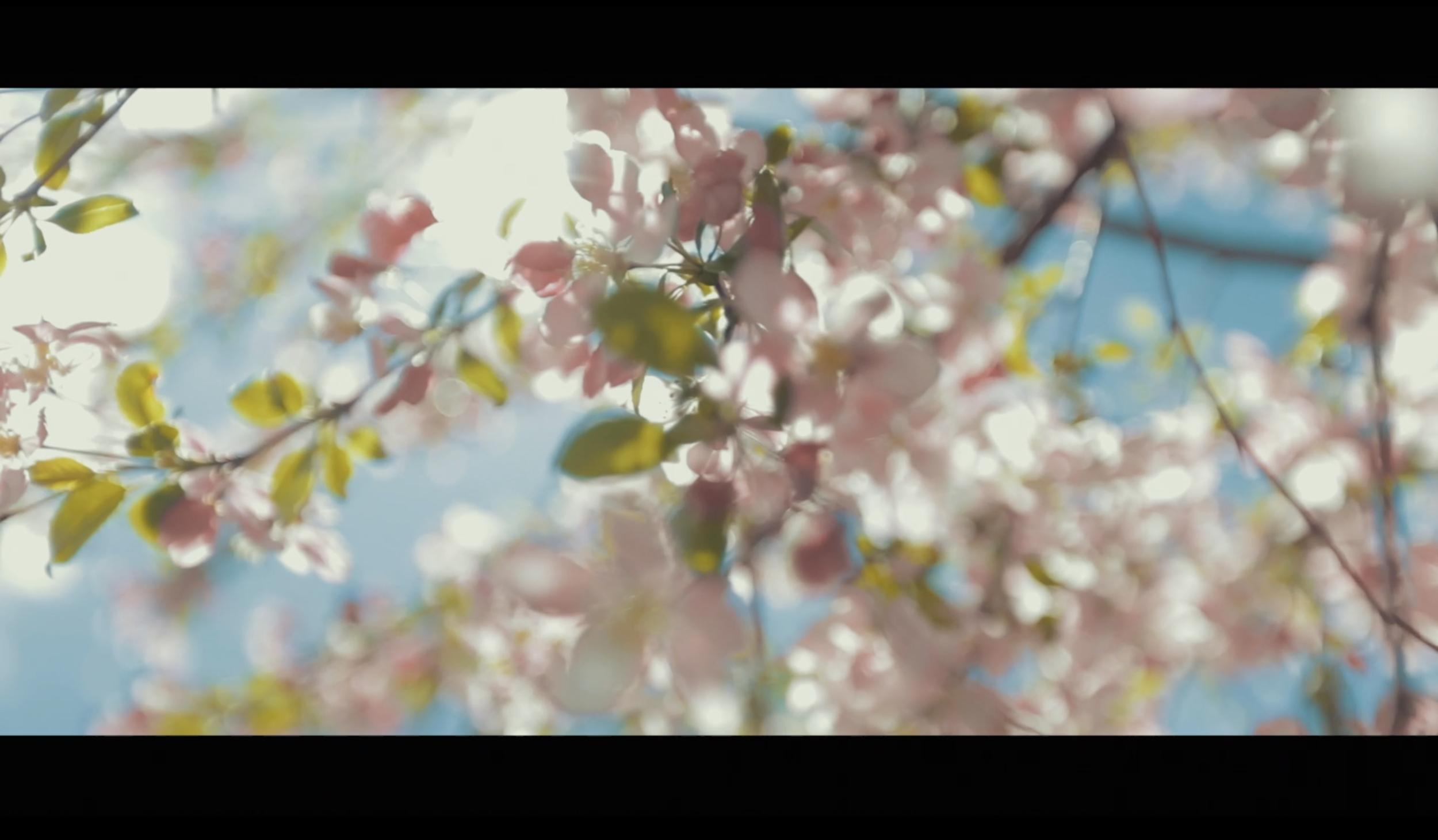 Creative Cinematography -