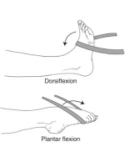 Ankle Dorsiflexion and Plantarflexion