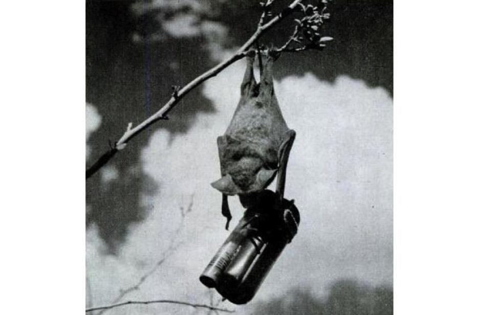 The bat bomb itself.