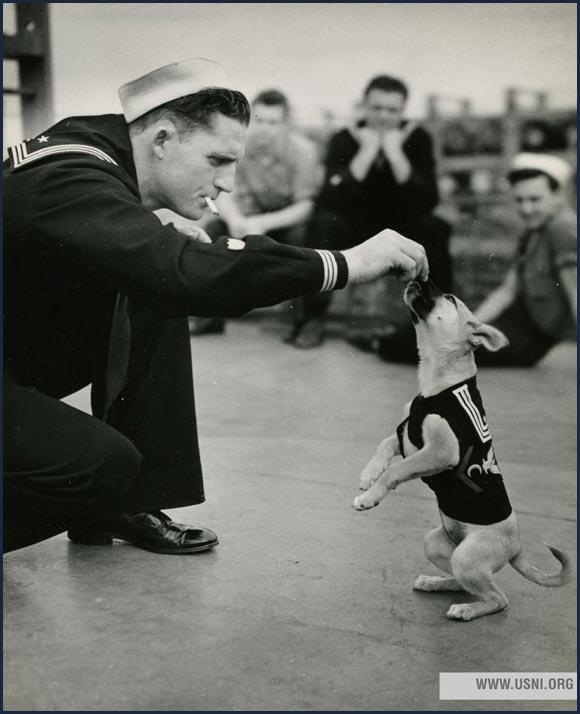 """Salty,"" the mascot of a Coast Guard destroyer escort, circa 1943."