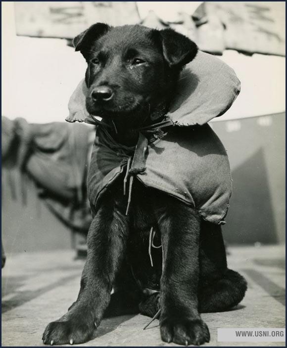 """Blackout,"" the mascot of a Coast Guard LCI, circa 1944."