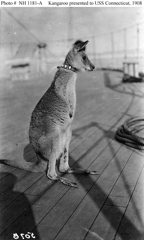 The citizens of Sydney, New South Wales, Australia presented USS  Connecticut  with a kangaroo when that ship visited in 1908 during the Great White Fleet's world cruise.