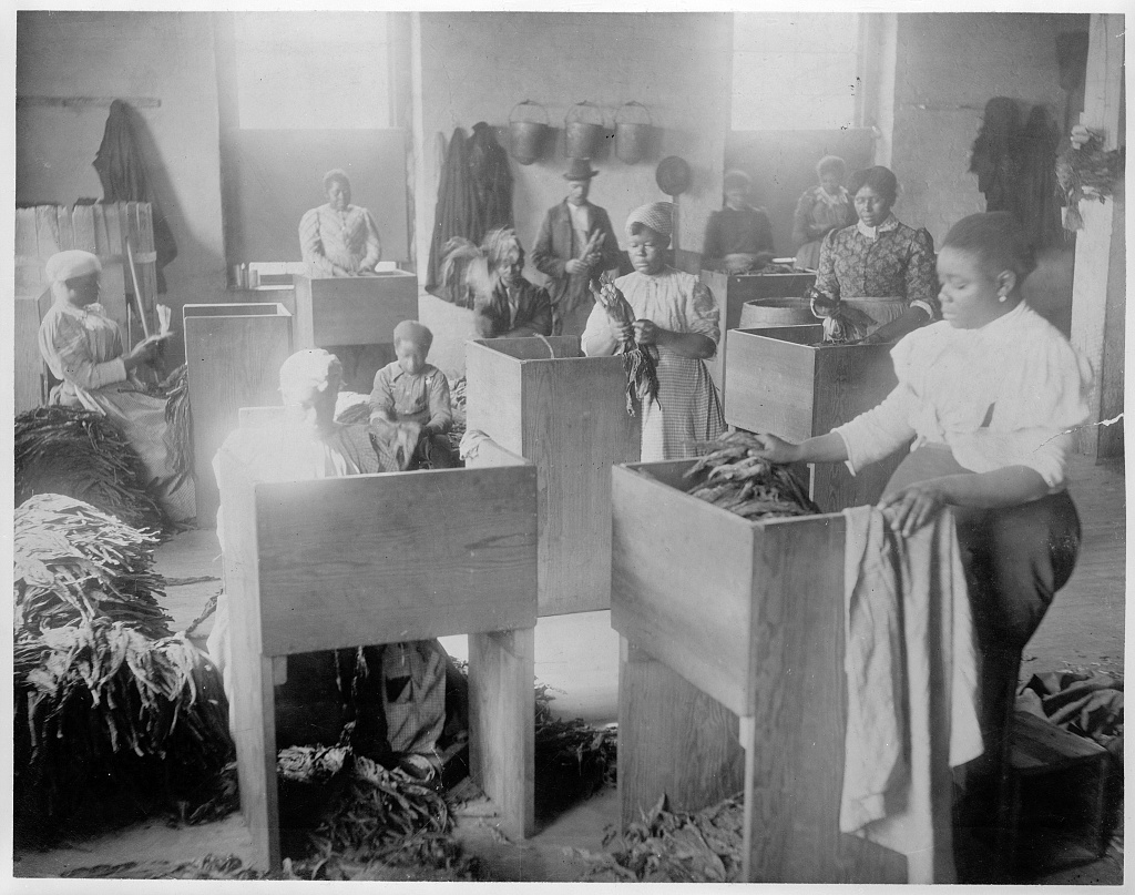 African Americans, mostly women, sorting tobacco at the T.B. Williams Tobacco Co., Richmond, Virginia