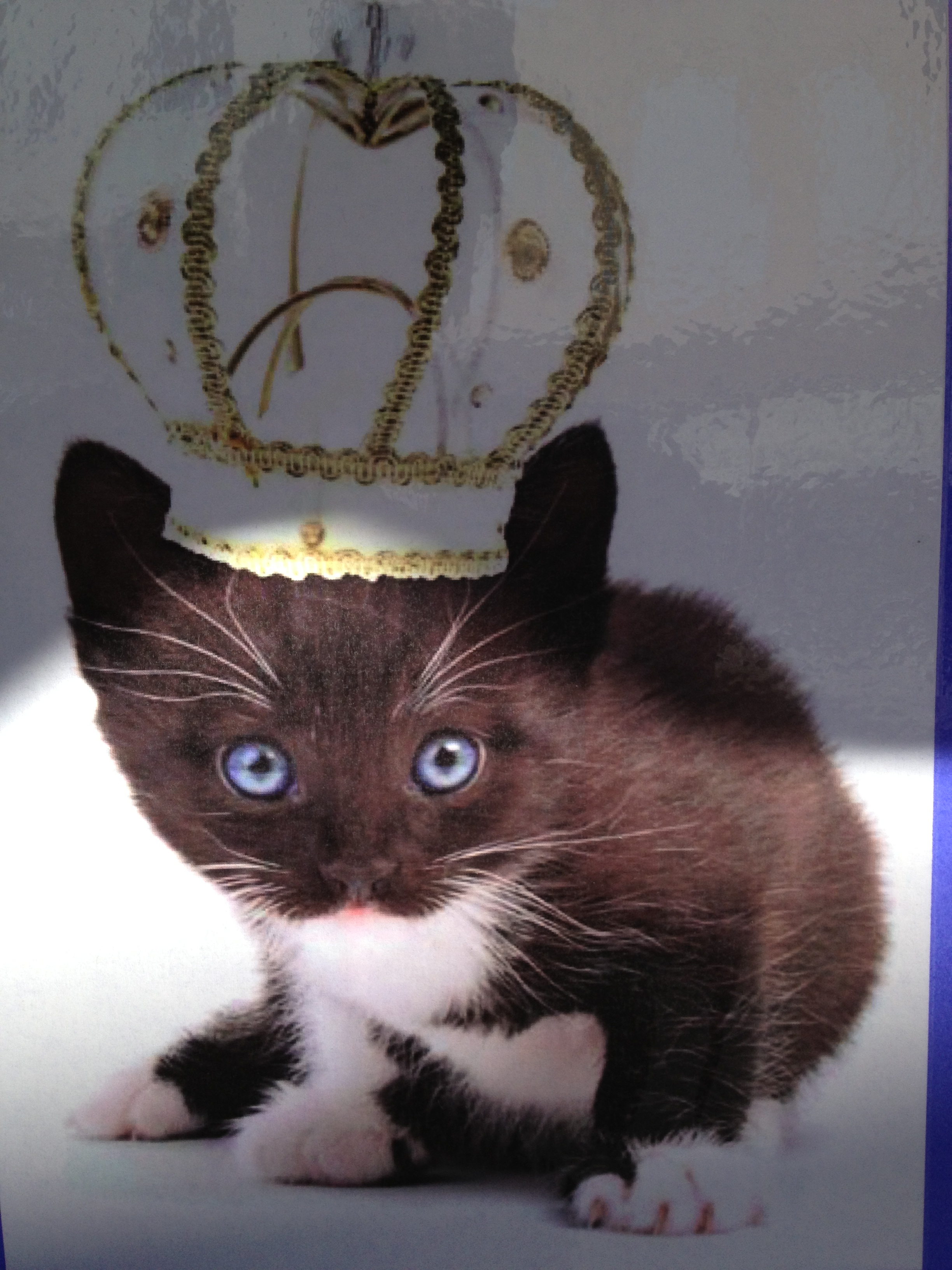 Ask yourself, would you have treated this kitty as royalty if she hadn't worn a crown?