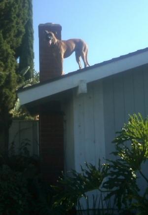 Oscar on roof 2.jpg