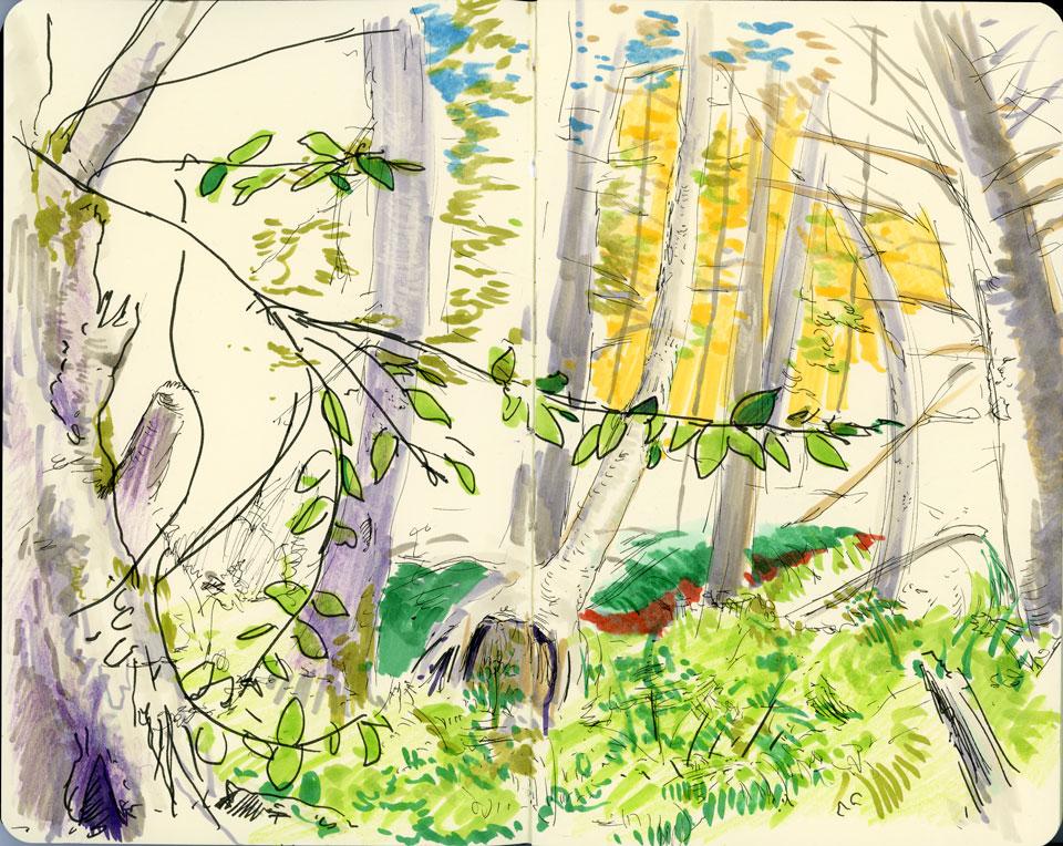 trees-vermont.jpg