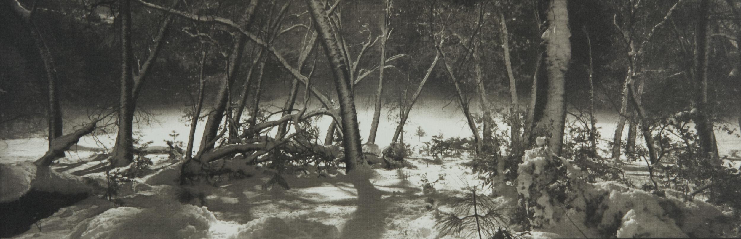 Awhanee Meadow