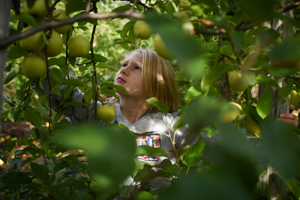 orchard001.JPG