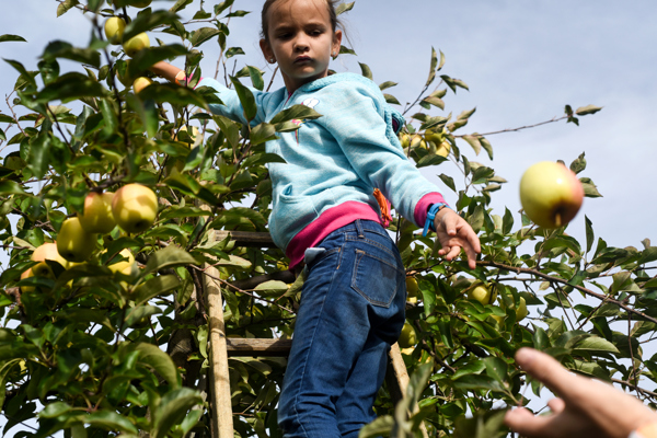 orchard004.JPG