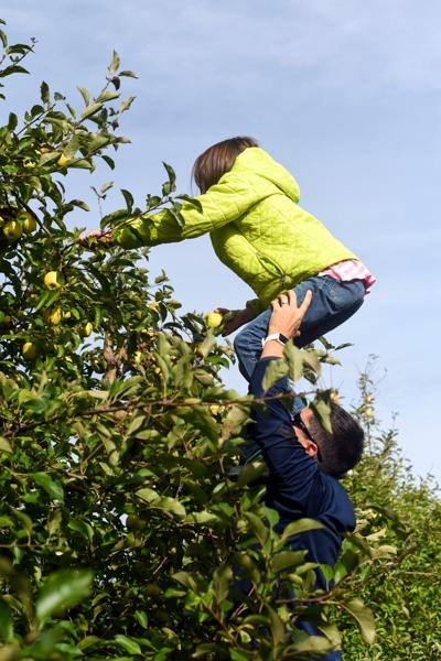 orchard018.JPG