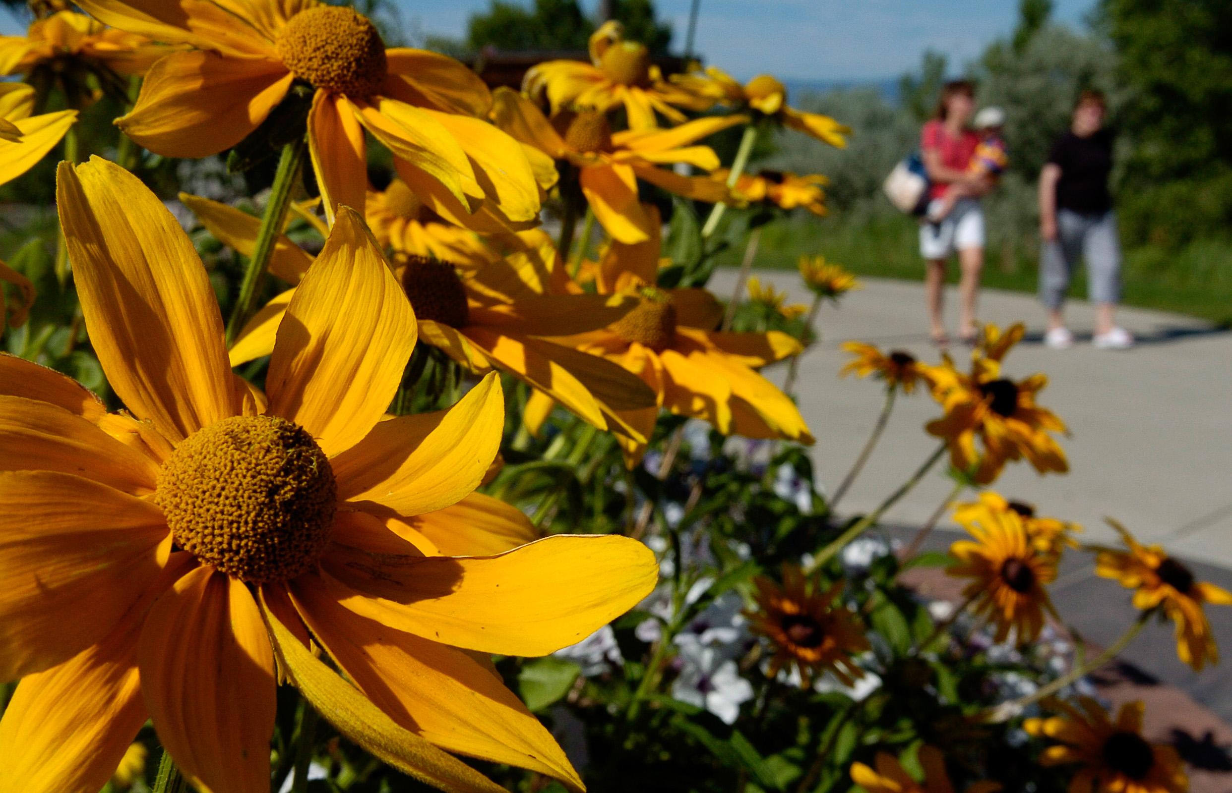 Flowers-Trail.jpg