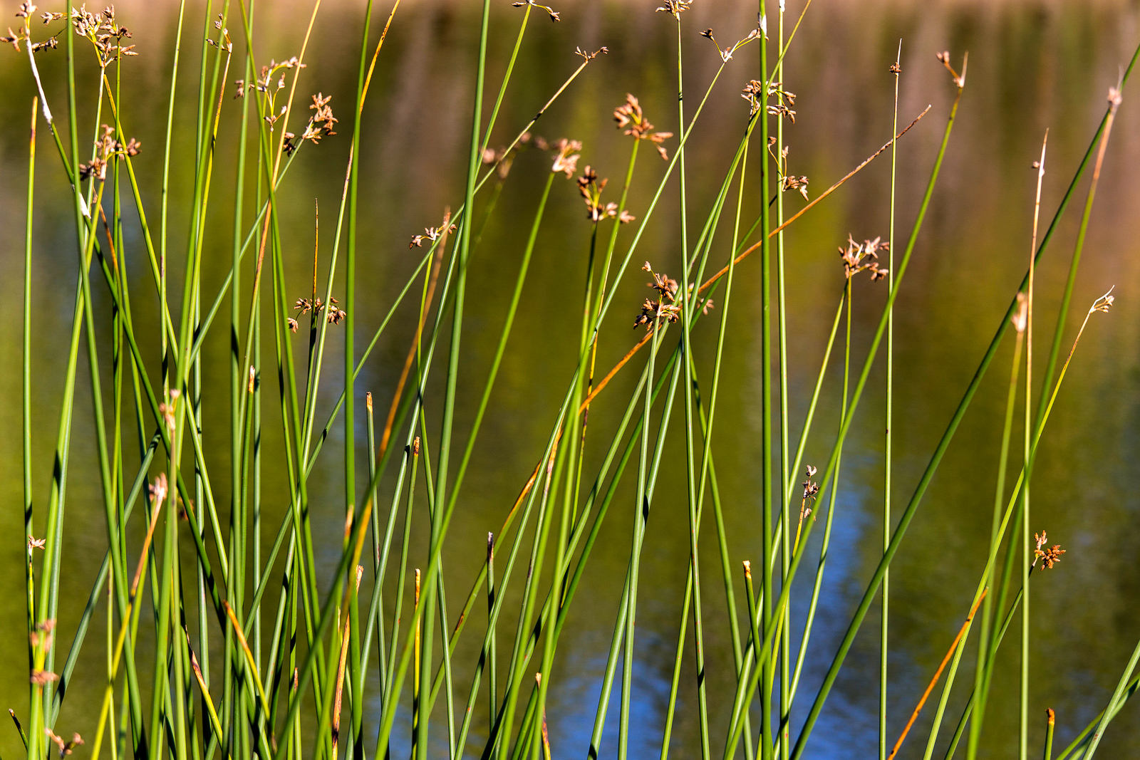 Jewell_Wetlands_Park_201409_10.jpg