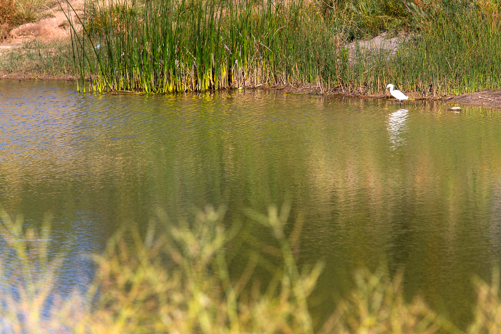 Jewell_Wetlands_Park_201409_9.jpg