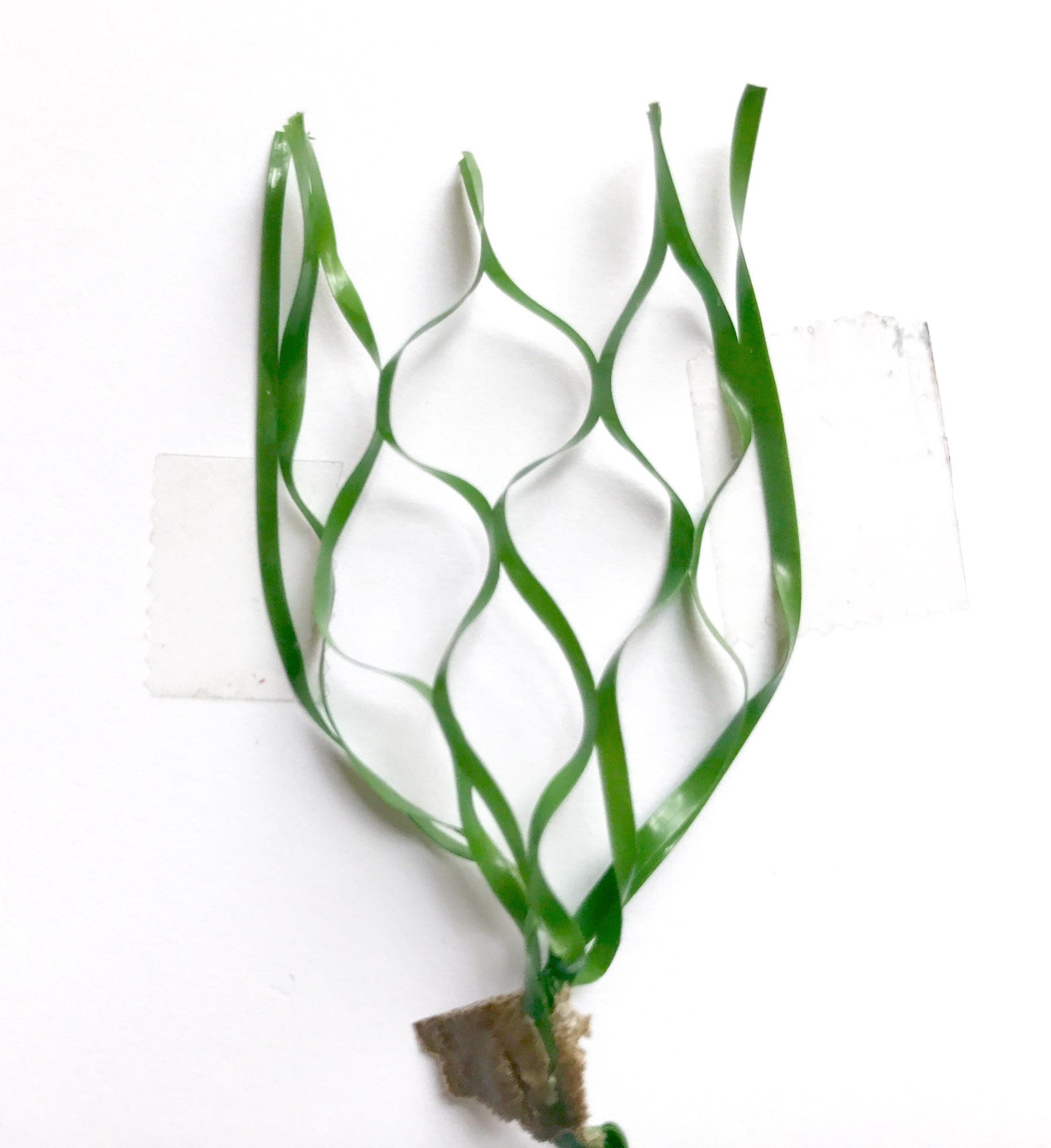 Honeycomb-like slit film fibers