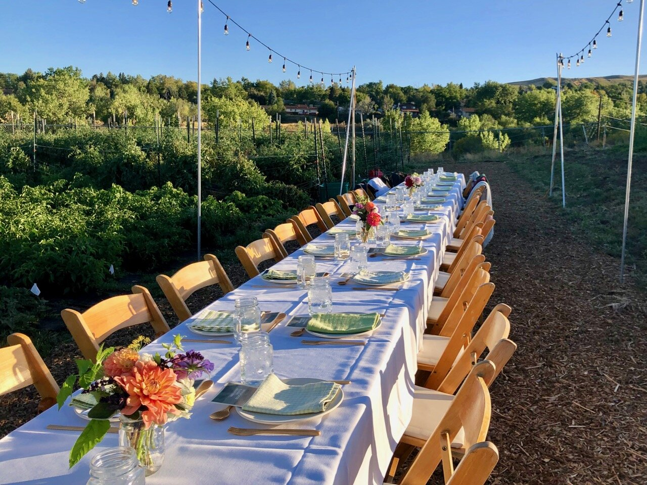 A long table with white tablecloth and wooden chairs in a farm field with lights above