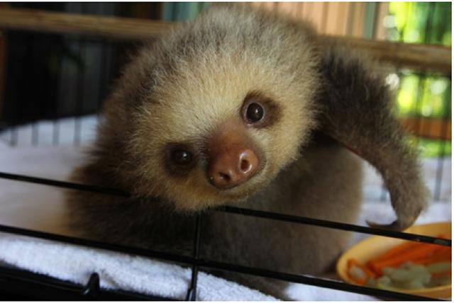 sloth2.png