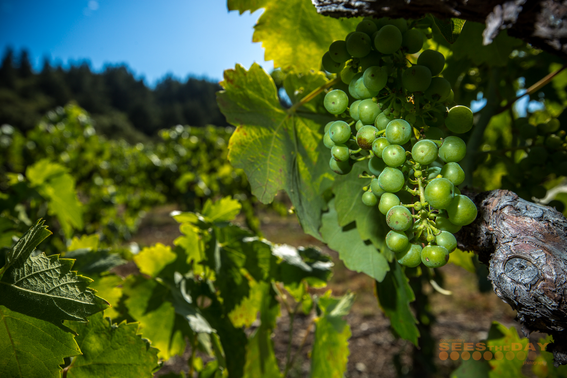 Francis_Ford_Coppola_Winery_Geyserville_Napa_023.jpg