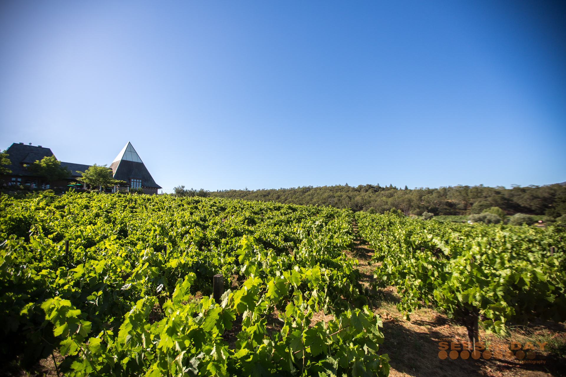 Francis_Ford_Coppola_Winery_Geyserville_Napa_024.jpg