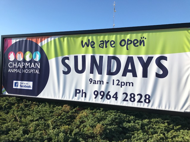 Looking for a vet that's open on Sundays? - Everything Geraldton