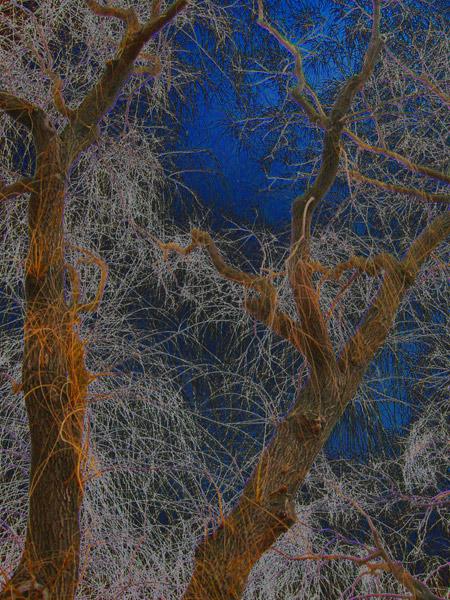 Friday Night Frisky Tree