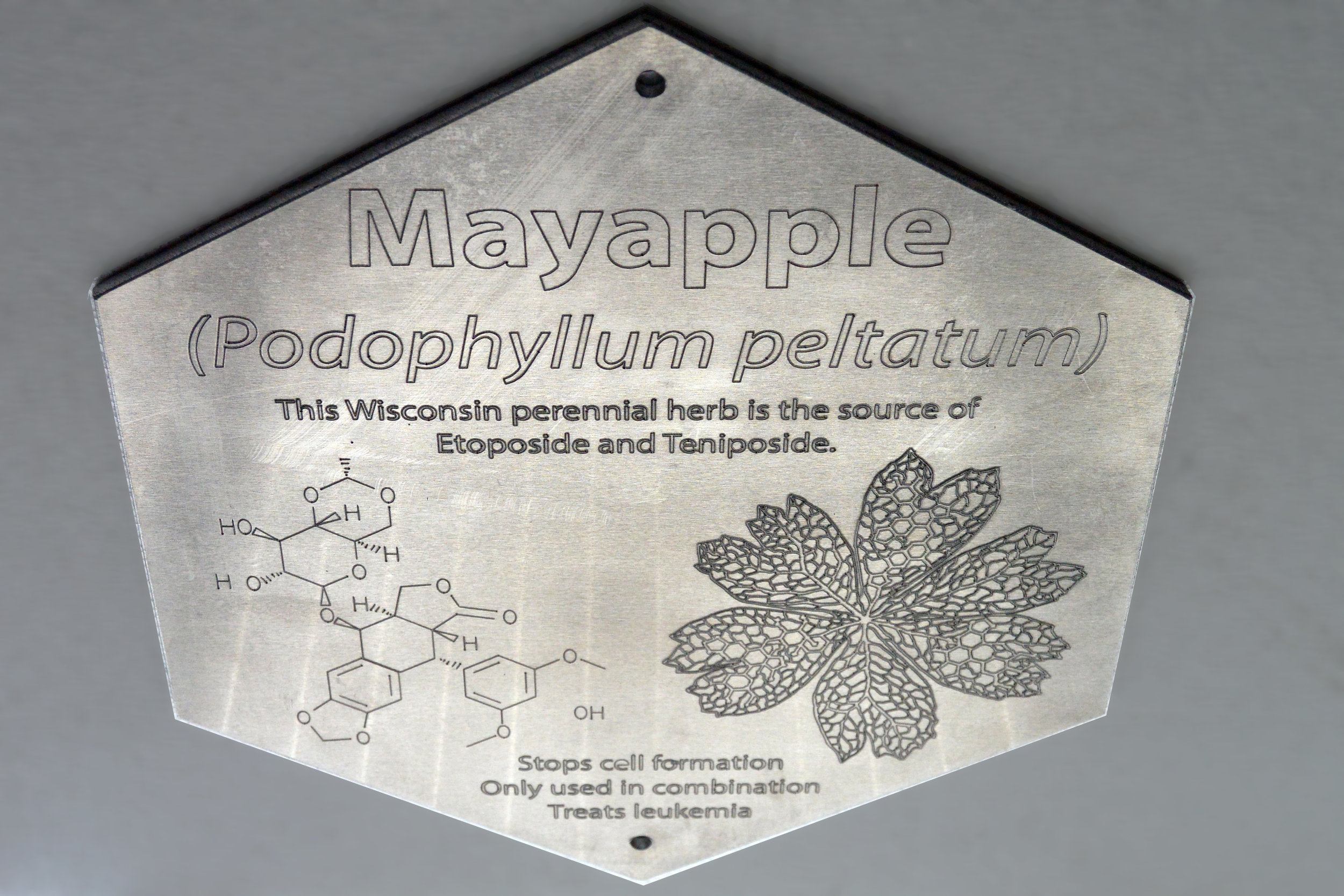 NA Plaque 4 Mayapple.jpg