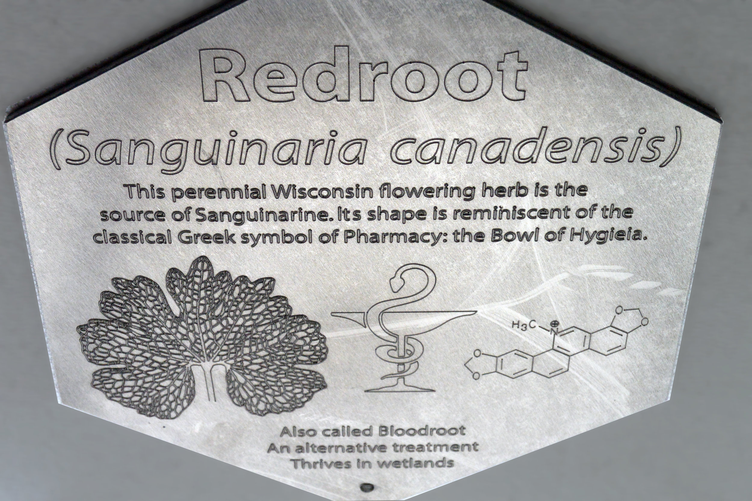 NA Plaque 7 Redroot.jpg