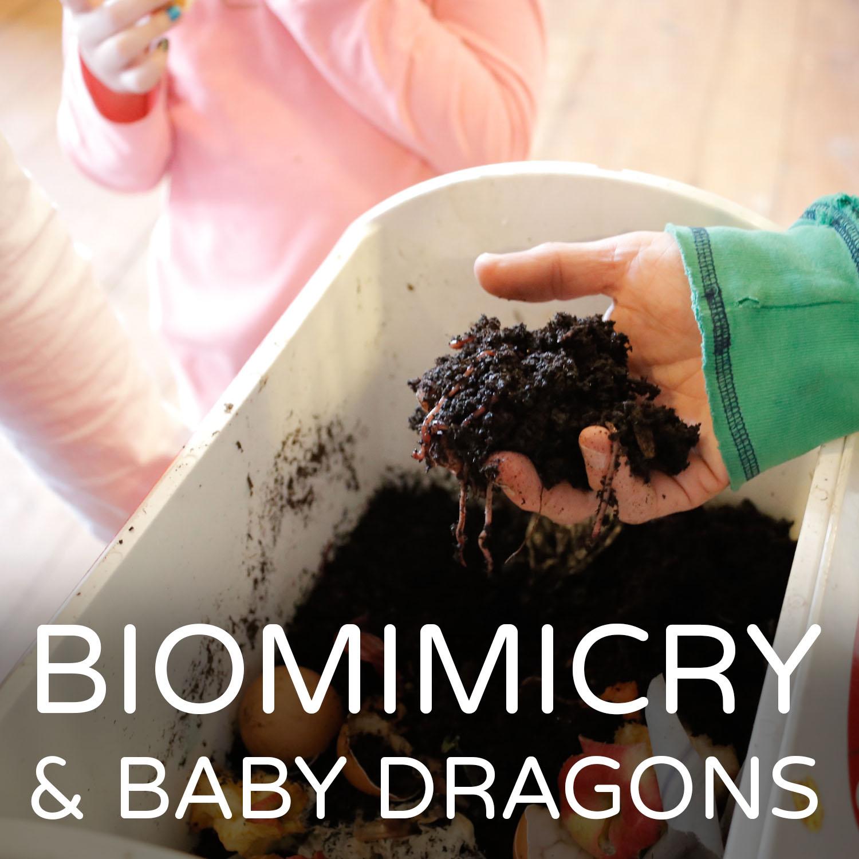 Biomimicry2.jpg
