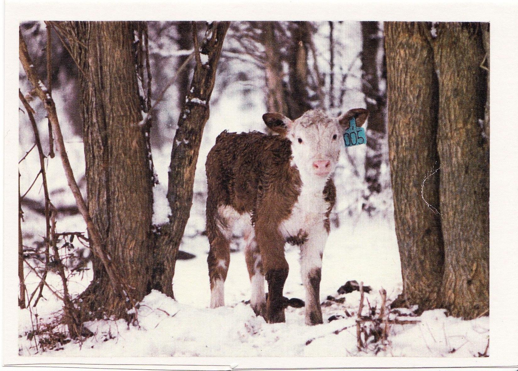Coley Christmas card 1980
