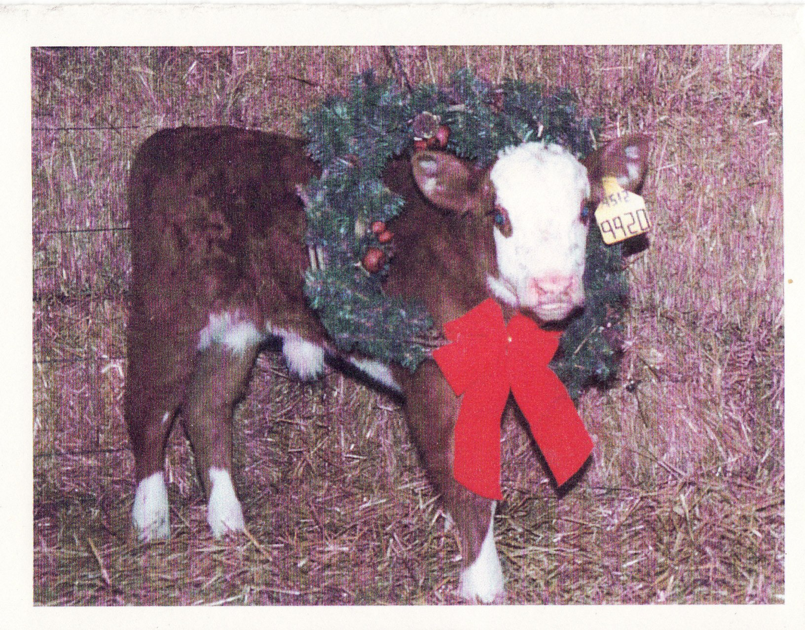 Coley Christmas card 1999