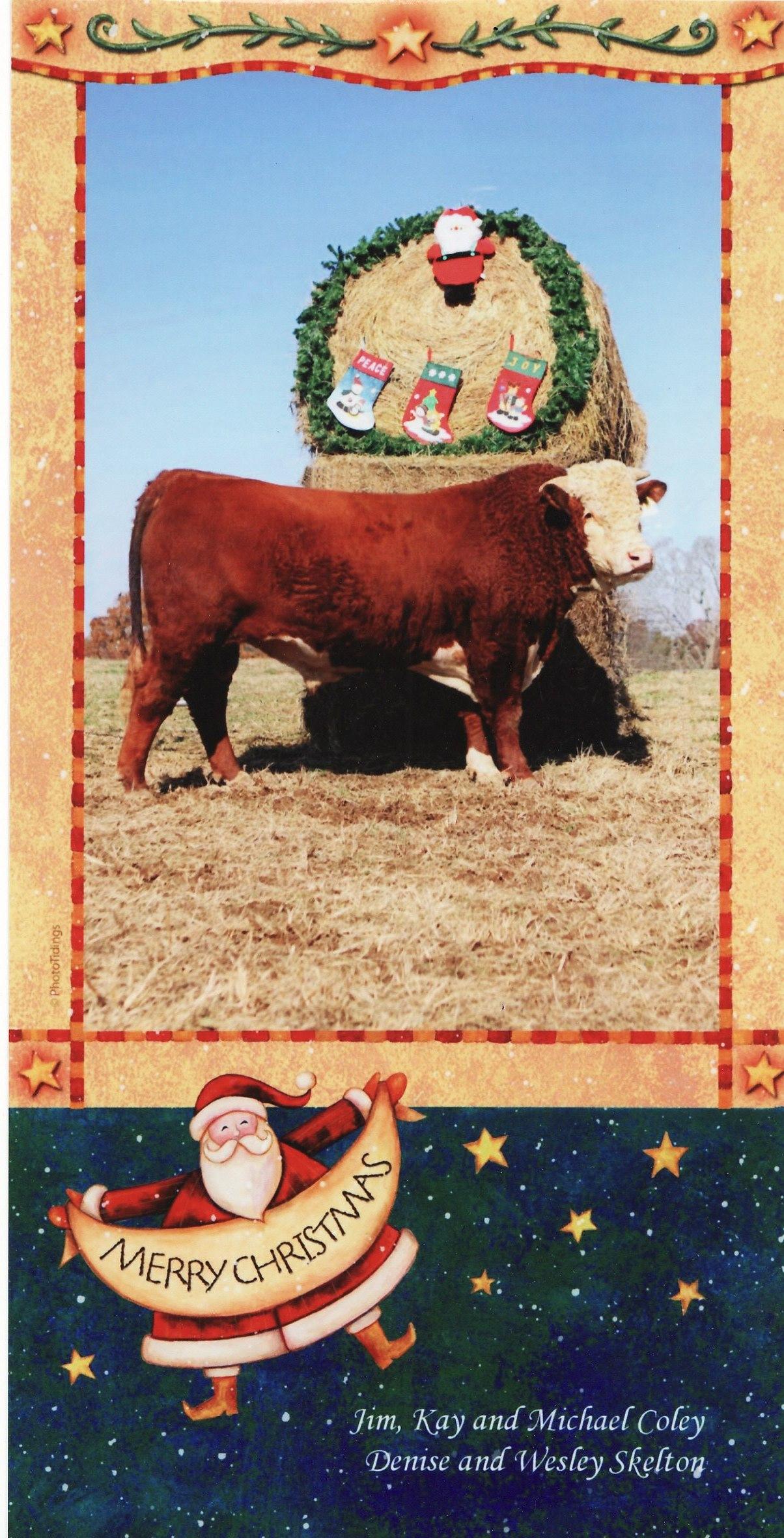 Coley Christmas card 2008