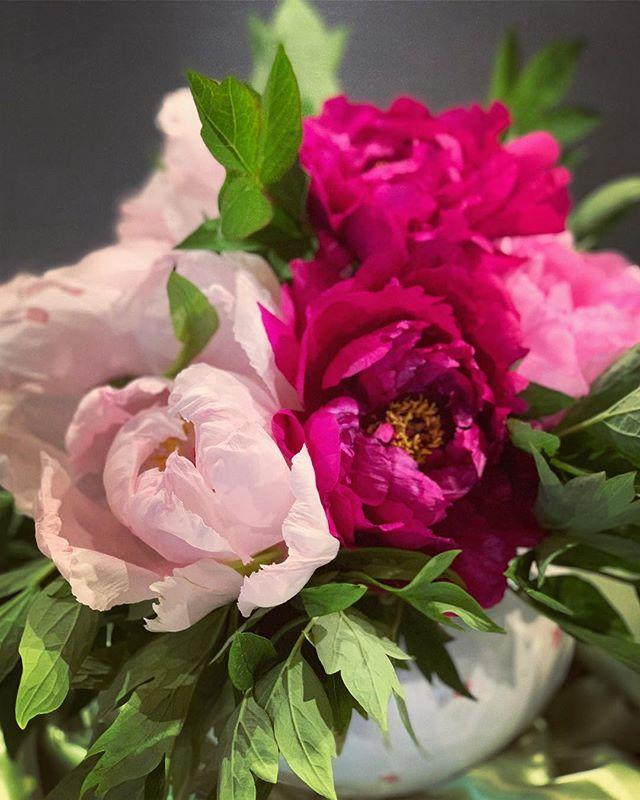 A pink cloud from our garden announcing the #MeranoFlowerFestival 💐 ——————— #Easter #Holidays #Flowers #Blumen #Fiori #Garten #Garden #Giardino #colours #farbenfroh #strauss #mazzodifiori #colorato #giardinaggio #gardening #beautifulthings #Festival #frühling #primavera #spring #Meran #Merano @love_merano @visitsouthtyrol
