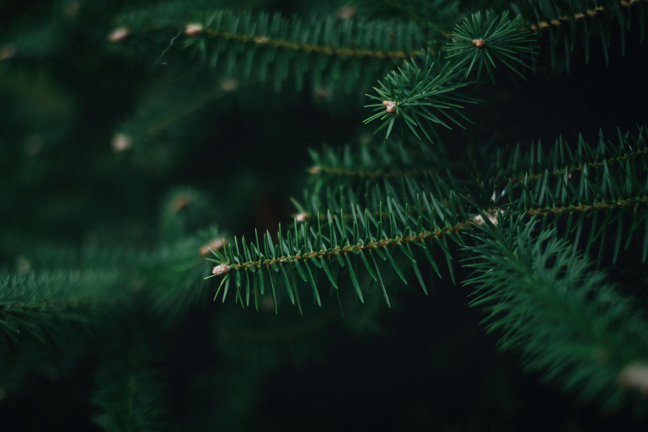Close up of a fern tree