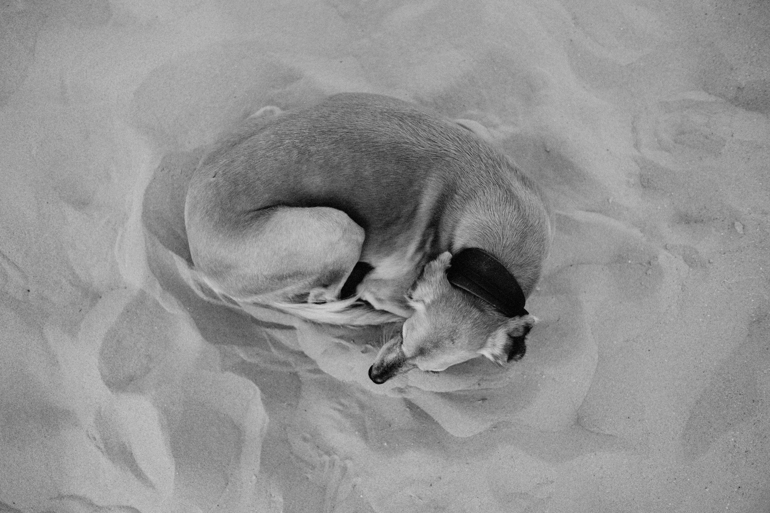 Dog sleeping the desert