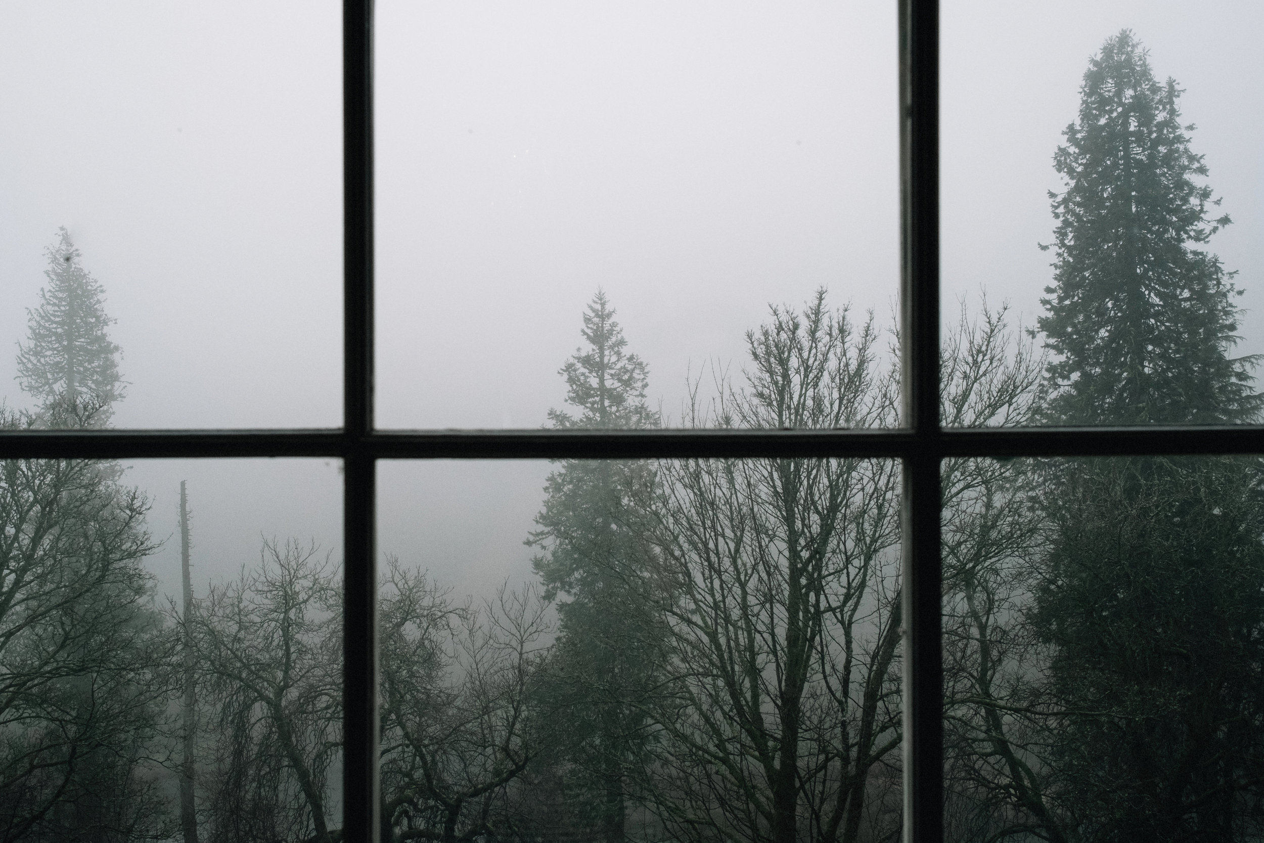 Foggy surrounded trees